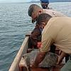 Polisi Gagalkan Jual Beli Penyu Hijau di Pelelangan Ikan