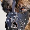 Hal Pertama yang Dilakukan Saat Terkena Gigitan Anjing Rabies