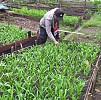 Bhabinkamtibmas Polsek Depapre Bantu Kelompok Tani Bersihkan Kebun