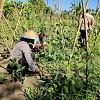 Petani Bersama Binmas Noken Bersenergi Dalam Program Kasuari